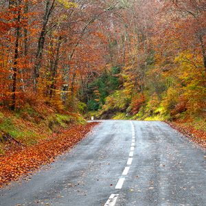 Tree services to avoid accidents on roads