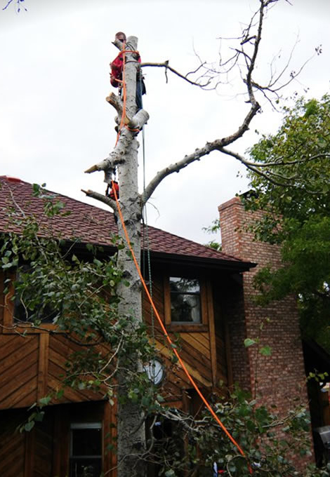 Tree Removal and Trimming Denver