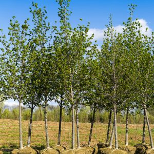tree services in and around Denver