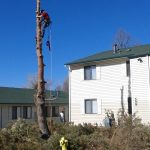Total Tree Care Colorado
