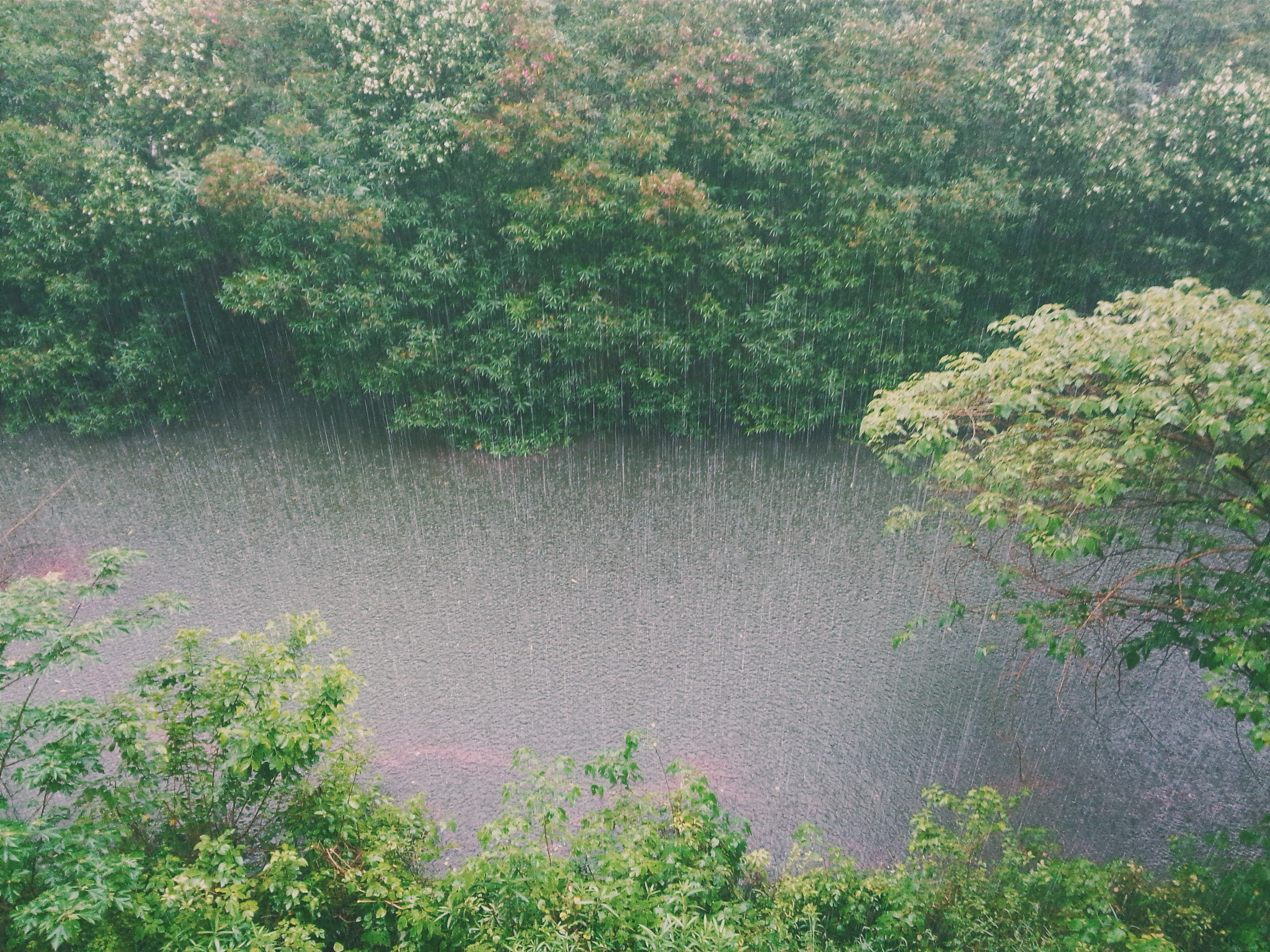 rain in forest