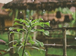 How to protect garden from heavy rain